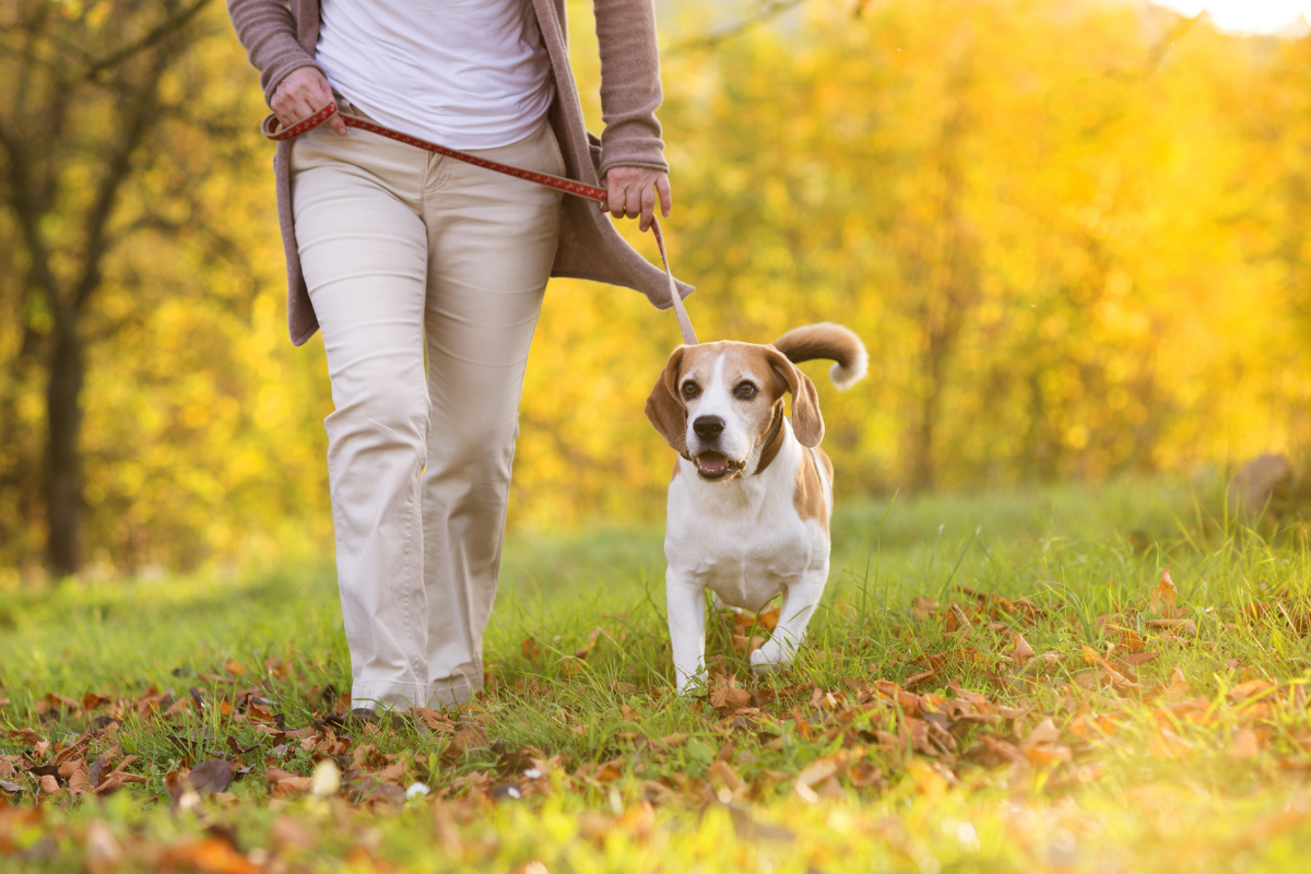 Dog friendly walking routes Solihull